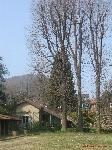 Giardino Atelier Architetto De Lucchi