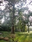 Parco Villa Palletta