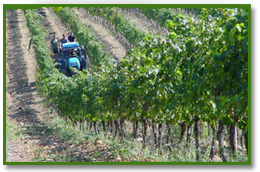 immagini_articoli/1310906823_coltivazione_sui_colli_e.jpg