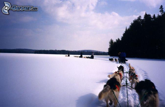 immagini_articoli/1391437909_cani_ghiaccio.jpg